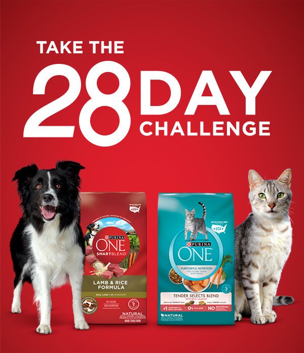 Take the 28 Day Challenge