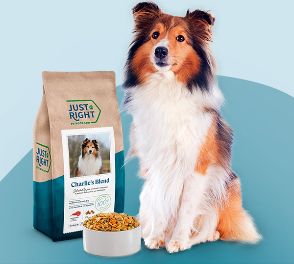 A multicolored dog sitting next to a bowl of dog food and a Just Right dog food back with his name and photo on it.