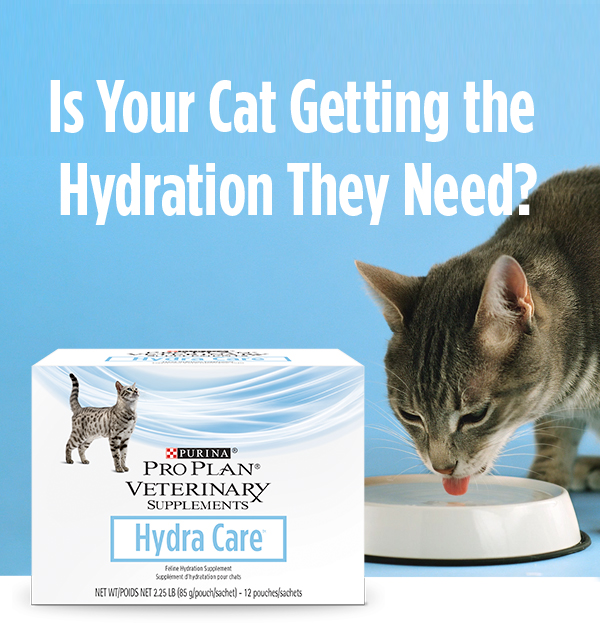 A grey cat drinking out of a white water bowl next to a container of Hydra Care. All on top of a blue background under white text reading, 'Is your cat getting the hydration they need?'
